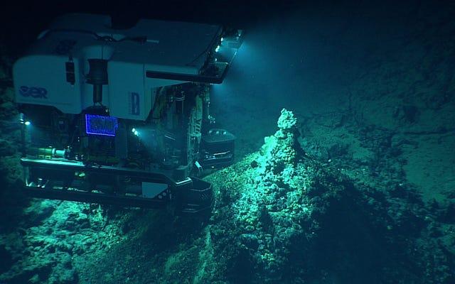 Bilim Adamları, Derin Okyanus Madenciliğinin Etkilerinin 'Sonsuza Kadar Dayanacağını' Uyardı