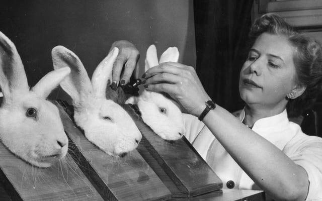 Тот, кто похитил Дария, одного из самых долгоживущих кроликов в мире, отправляется в ад
