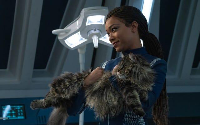 Star Trek: Discovery, teraz z udziałem Grudge The Cat
