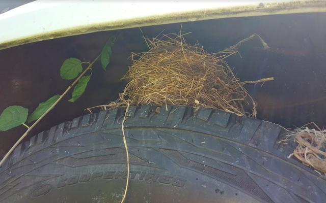 いくつかの厄介な小鳥が私のジープJ10プロジェクトを保留にすることを決定しました