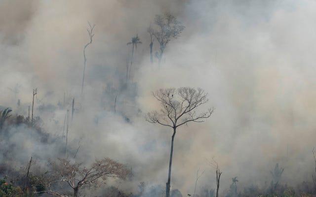 За уничтожением бразильской Амазонки стоят банды преступников