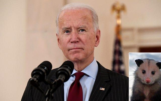 Biden nomina la cuenta popular de Twitter @PossumEveryHour para OMB después de descubrir el apoyo bipartidista de los tweets