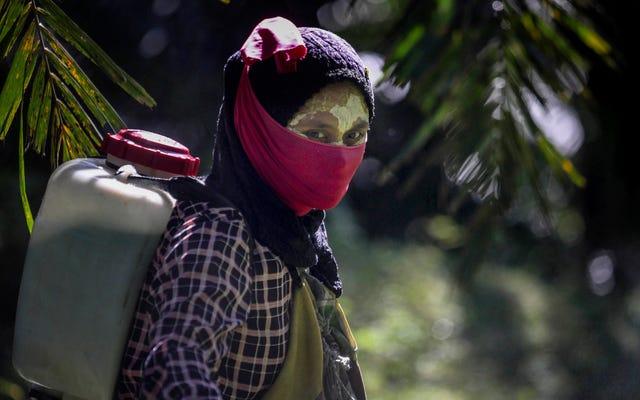パーム油産業は女性にとって悪夢です:レポート