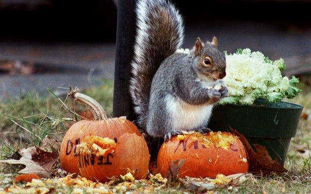 Dernier appel: écureuils potelés, une aubaine de chaudronnier et un tour de magie au cheeseburger