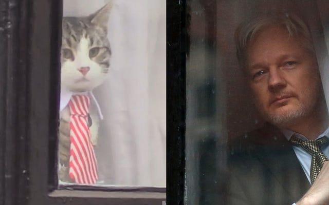 退屈で無関係なジュリアン・アサンジがキティ猫のドレスアップを演じる