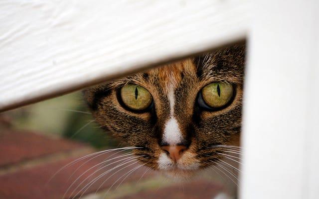 I gatti uccidono così tanti uccelli in Australia che il governo ha creato la prima zona di esclusione senza felini