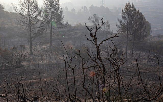 Wildfire wybucha w Hiszpanii, gdy Europa ucieka od rekordowego ciepła