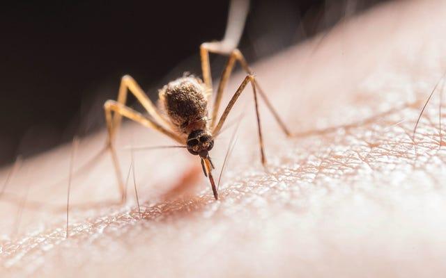 मच्छर काटने के लक्षणों को कैसे कम करें