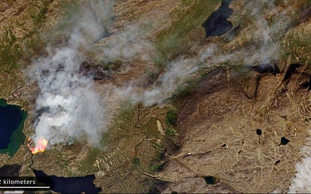 """Grenlandia płonęła w tym tygodniu pośród """"bezprecedensowych"""" pożarów Arktyki"""