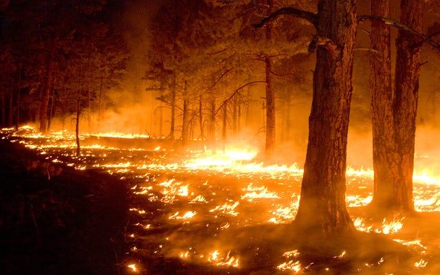 Pożary już w tym roku wypaliły oszałamiającą ilość ziemi w Stanach Zjednoczonych