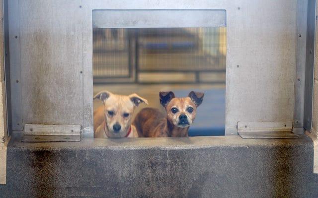 Моби и Лиза Блум - участники движения за то, чтобы сделать приюты для собак в Лос-Анджелесе веганскими