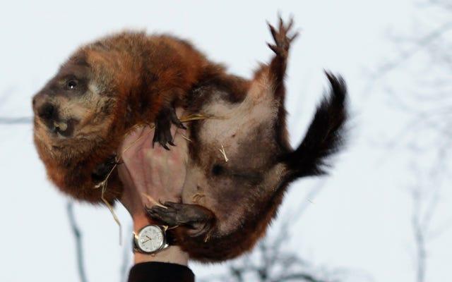Groundhog, Hava Durumu Tahmin Etmede Almanaktan Sadece Biraz Daha Kötüdür