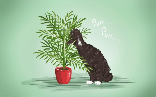 最高の低メンテナンス、ペットに優しい観葉植物