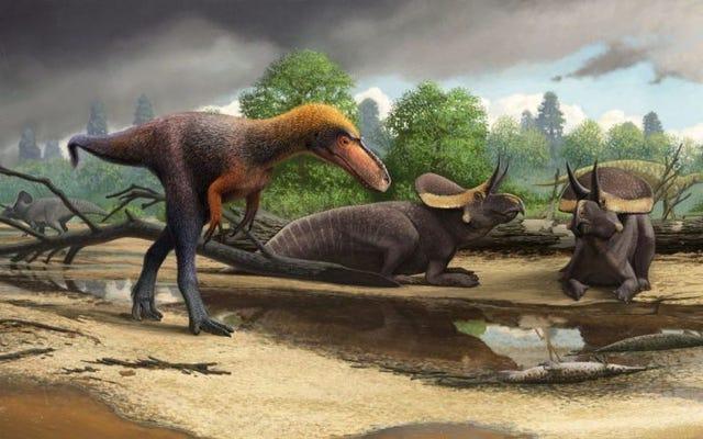 ティラノサウルスレックスのこの遠い親戚はかなりミニチュアの暗殺者でした