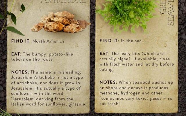 Aprenda sobre las plantas comestibles comunes en la naturaleza con esta guía visual