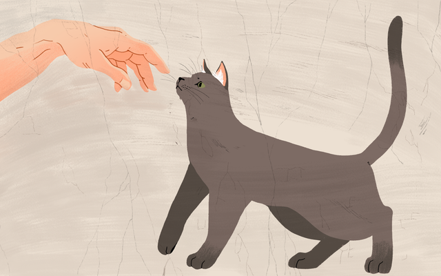 วิธีรับแมวให้ถูกใจคุณ