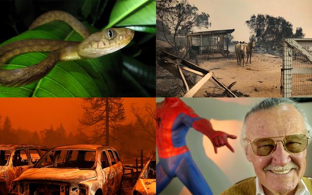 山火事、侵略的なヘビ、そして伝説に別れを告げる:今週のベストギズモードストーリー