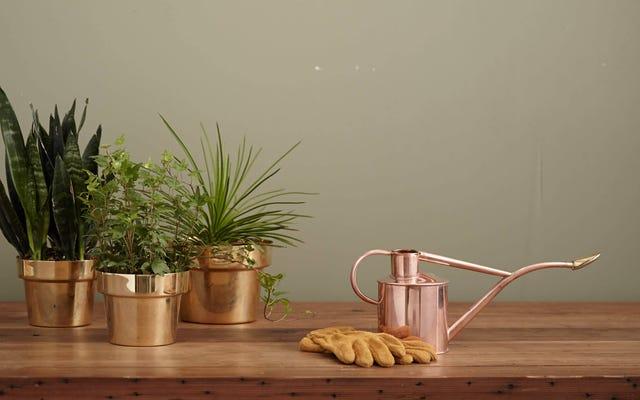 Cara Membuat Jadwal Penyiraman Tanaman Sederhana