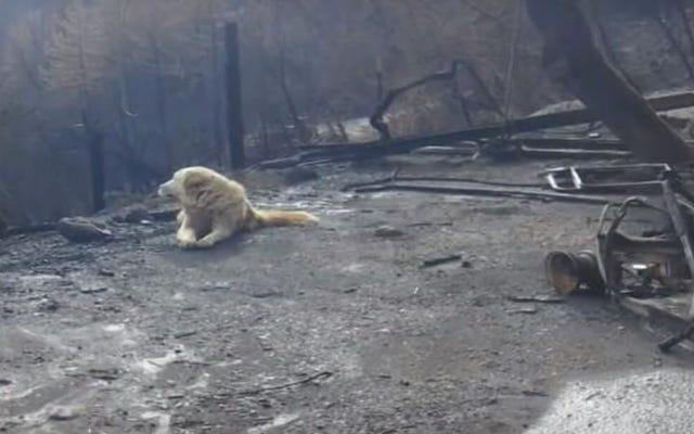 カリフォルニアでの致命的な火災の後、犬は家の残骸の中で飼い主が戻ってくるのを1か月待っていました