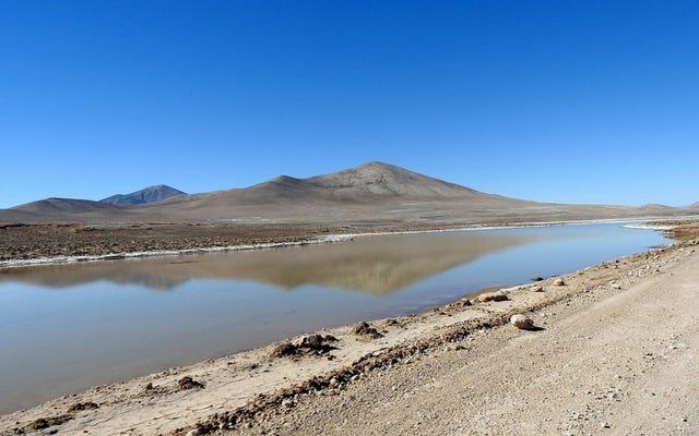 Trận mưa lớn đầu tiên trong nhiều thế kỷ gây ra làn sóng chết chóc ở sa mạc khô cằn nhất Trái đất