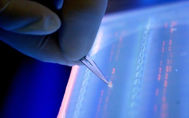 Pengadilan Banding Menjunjung Paten CRISPR, Berpotensi Mengakhiri Sengketa Pahit