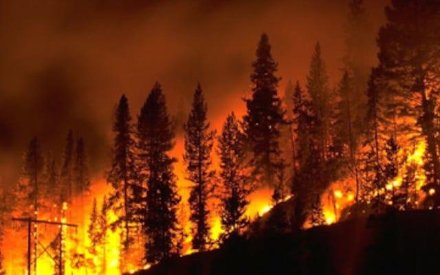 アメリカが世界の他の場所よりも強い森林火災を抱えている理由