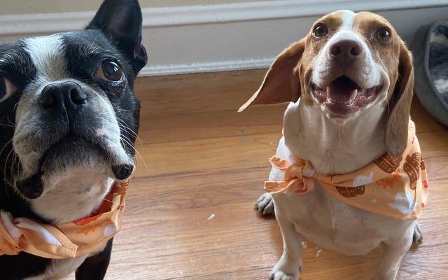私は毎年犬のために特別な感謝祭の食事を作っています、そしてあなたもそうすることができます
