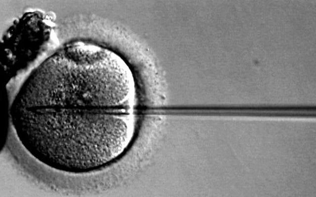 Ilmuwan Cina Memodifikasi Embrio Manusia Secara Genetik — Lagi