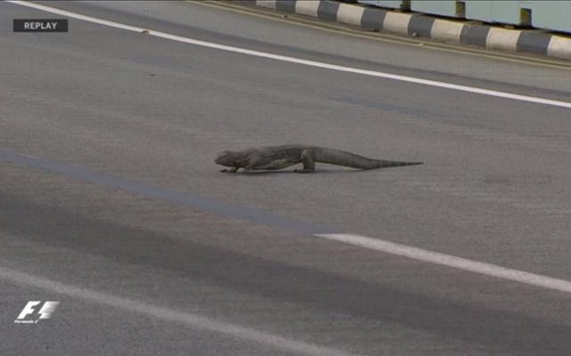 To zdecydowanie gigantyczna jaszczurka na torze wyścigowym
