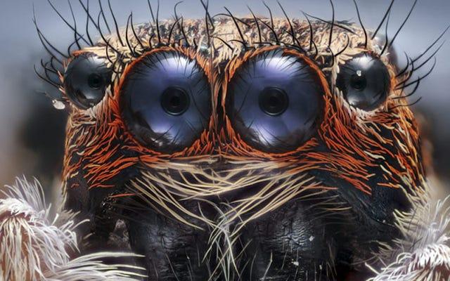 ニコンスモールワールド顕微鏡コンテストの優勝写真はあなたに現実を疑わせるでしょう