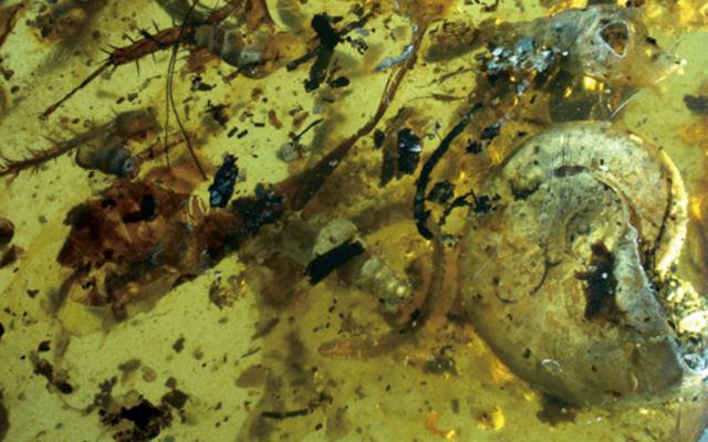 Soyu Tükenmiş Ünlü Deniz Yaratığı Bir Şekilde 99 Milyon Yıllık Ağaç Reçinesinde Yaralandı