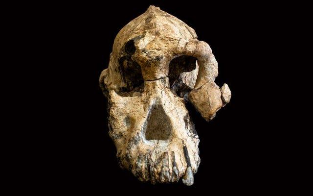 人間の祖先の頭蓋骨は、私たちの進化の過去の顔をかつてないほど明らかにします