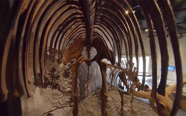 Drone Mungil yang Membawa GoPro Terdekonstruksi Menangkap Terbang Menembus Museum Dinosaurus yang Luar Biasa Ini