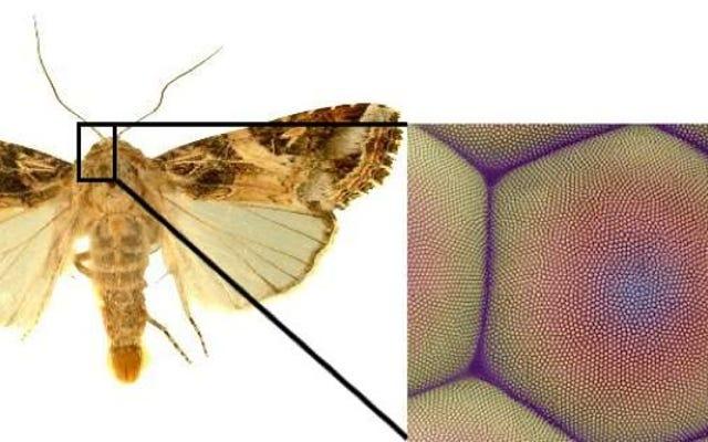 蛾の目が私たちに「スマートな壁紙」を与えることができた後にパターン化されたグラフェン