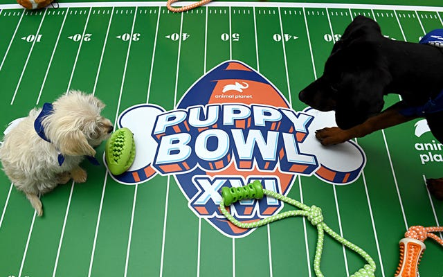 Cómo ver Puppy Bowl XVII el domingo del Super Bowl