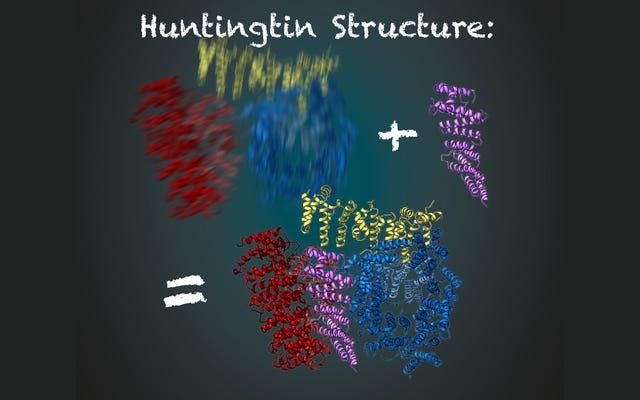 ใน 'Key Milestone' นักวิทยาศาสตร์จะได้เห็นโปรตีนจากโรคของ Huntington อย่างชัดเจน