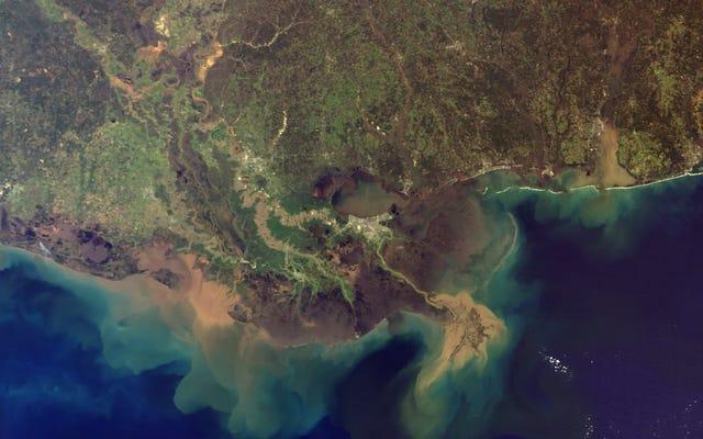 メキシコ湾の「デッドゾーン」は、今年の夏に8,000平方マイル以上に膨れ上がる可能性があります