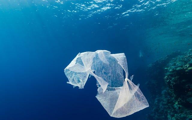 私たちは魚の海を空にし、それらをプラスチックで満たしています