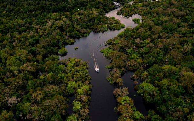 Игнорирование пресноводных экосистем может погубить тропический лес Амазонки