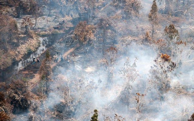 Pożary lasów zamieniają Indonezję w Marsa
