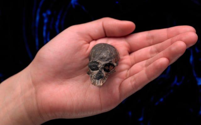 科学者たちは2000万年前のサルの脳構造を明らかにする