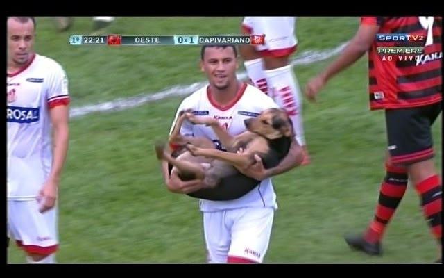 Cún con dễ thương và ngoan trên sân bị đánh bay đi như một đứa trẻ nhỏ