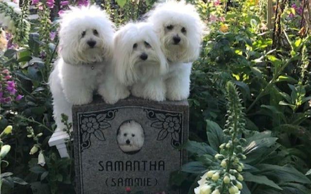 Собаки Барбры Стрейзанд: Мы скучаем по мертвой маме-клону