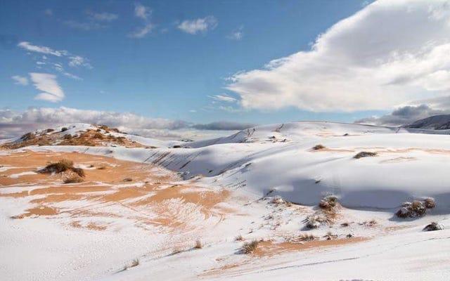 サハラでは40年近くで4度目の雪が降り、画像も同様に壮観です。