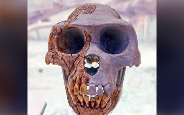 化石化した手が人間とチンパンジーの間の最後の共通の祖先について言うこと