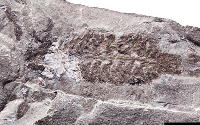 4億3600万年前のスコーピオンは惑星の最初のエアブリーザーの1つでした