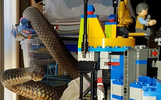 母親は息子のレゴの中で世界で2番目に有毒なヘビに出会う