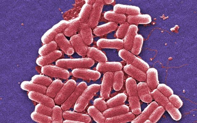 Nghiên cứu rất thú vị Phát hiện 1 trong 3 người đi du lịch nước ngoài sẽ nhặt được vi khuẩn kháng thuốc