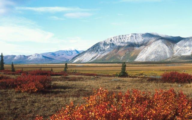Bộ Nội vụ bị buộc tội che giấu thông tin chính về tác động của việc khoan dầu trong khu bảo tồn động vật hoang dã quốc gia Bắc Cực