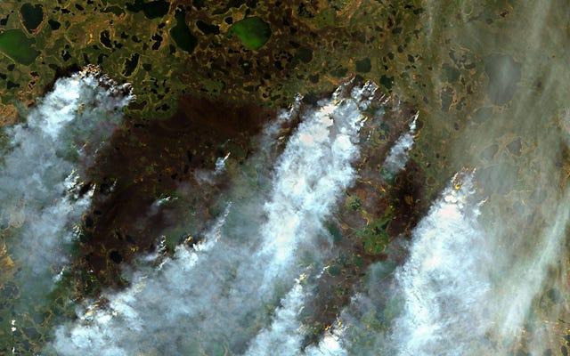 Syberyjskie pożary uwolniły w tym roku rekordową ilość węgla